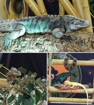 Join Safari Jeff in Centre Court at the @northgateyqr! 🐸🐢🐍🦎*Free Admission*  This thrilling and educational interactive live show features an array of beautiful and rare reptiles from around the world!! ShowTimes  THURS 🔹️ 1PM & 6:30PM FR
