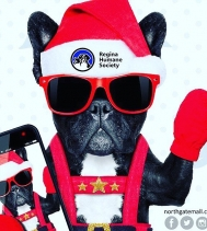 Yay! It's Santa Paws Photos 📸happening this SUNDAY!!! Bring your fur-baby down to tell Santa what kind of treats they want this year! 🐶🥩 This Sunday from 12PM - 4PM! Visit northgatemall.ca for restrictions! Half the proceeds will be donated to