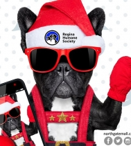 Today is Santa Paws Photos 📸  Bring your fur-baby down to see Santa 🎅 from 12PM - 4PM! Half the proceeds will be donated to the @reginahumanesociety ❤ Visit http://northgatemall.ca/blogs/post/santa-paws for restrictions. #santaphotos